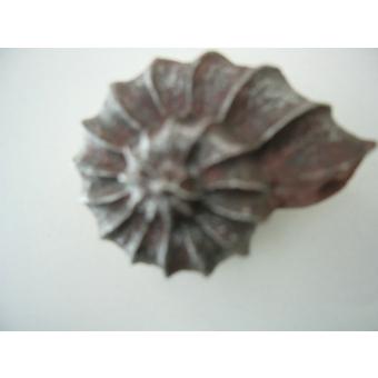 Kagyló fogantyú