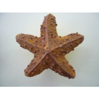 Tengeri csillag fogantyú